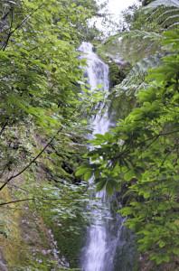 Wasserfall Kaikoura
