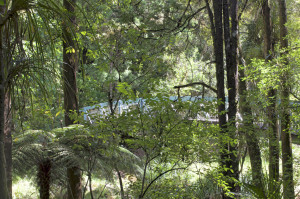 Brücke Whangarei Falls