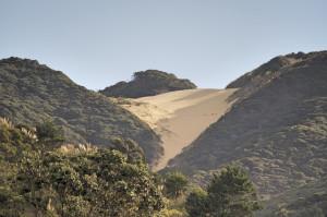 Landscape Ahipara2