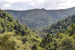 Wald Piha