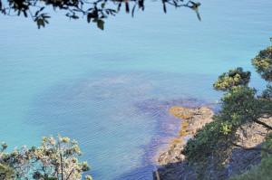 Wasser Whale Bay