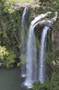 Whangarei Falls3