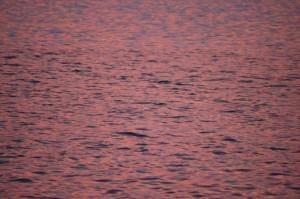 Pinkes Meer