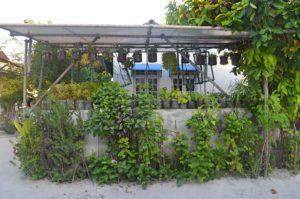 Gärtnerei Einheimischen Insel 2